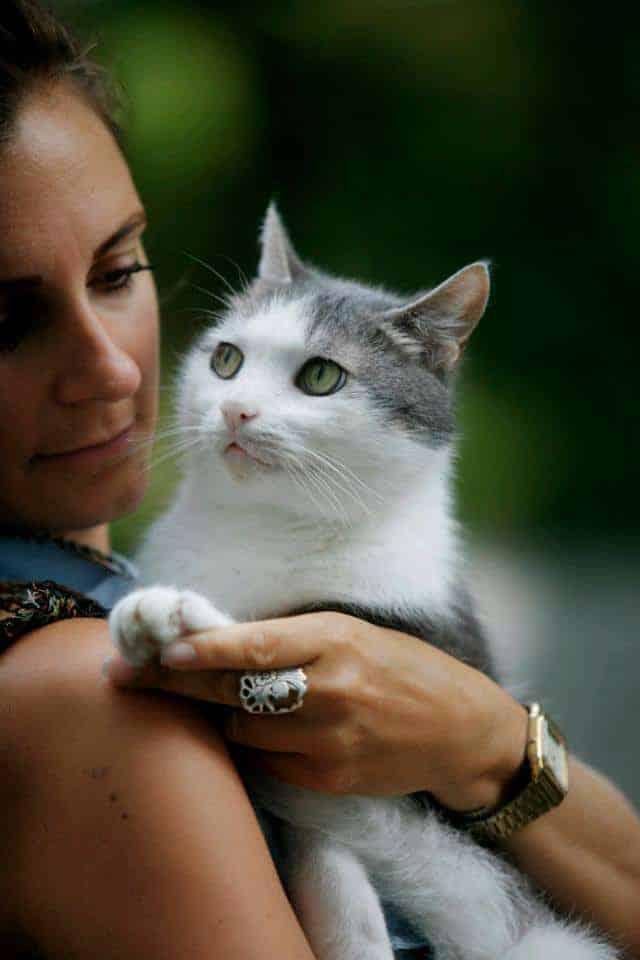 Tierkommunikation mit Katze