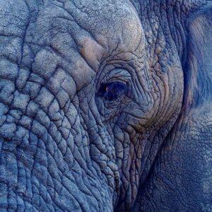 Elefant Seminar