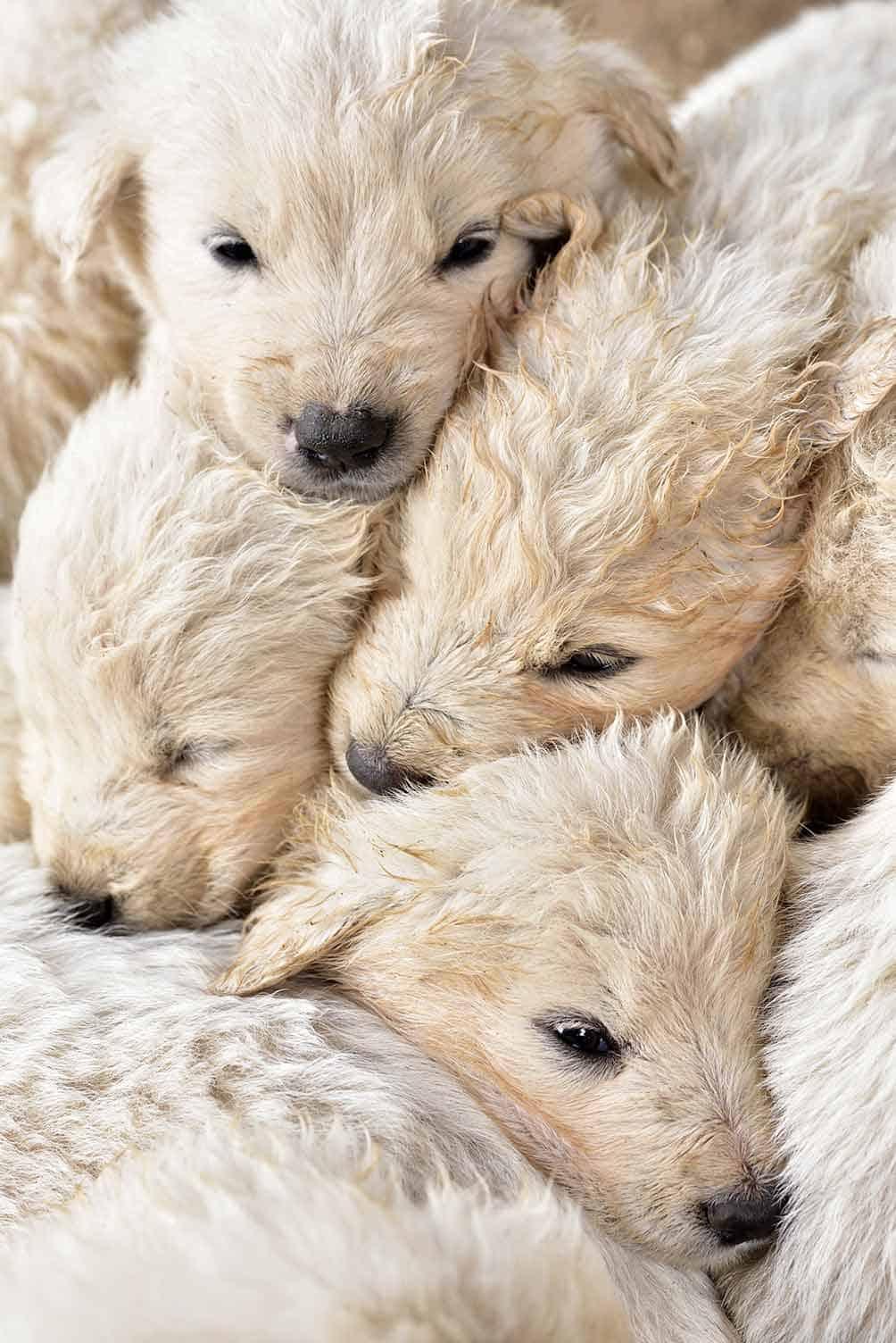 Tiertelepathie Hunde