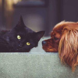 Notfall Tierkommunikation